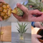 kak-vyrastit-ananas-doma-2